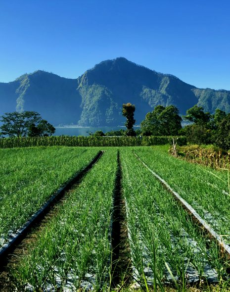 Rice fields and mountains in Ubud, Bali. Free things to do in Ubud, Bali