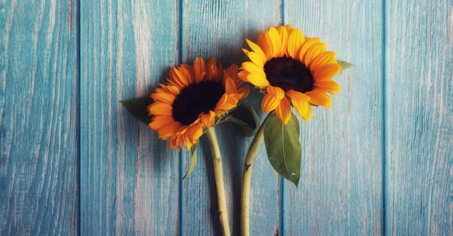 How to kick bad habits (and replace them with good habits) sunflowers lie on blue wood background to signify change