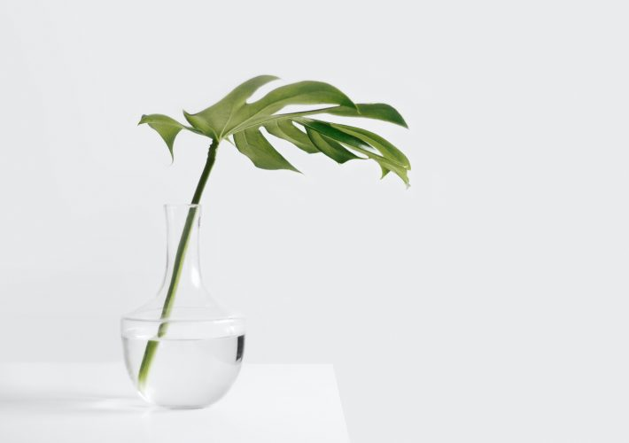 Plant palm leaf in a glass vase on a white table in a white room for simplify your life