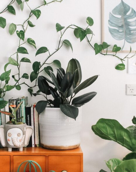 Lots of big plants are sat on a wooden dresser surrounded by books, mugs, pictures.
